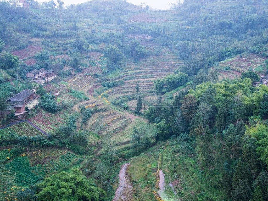 Terraced farmland on the Yangtze near Changshou.