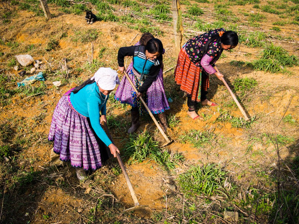 Ladies farming in their traditional clothing, near Moc Chau.