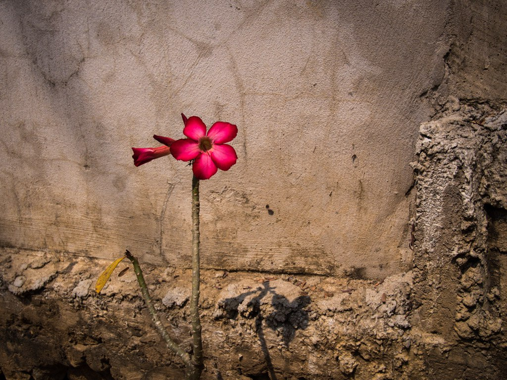 Banksy flower in the heat, near Nong Khiaw.