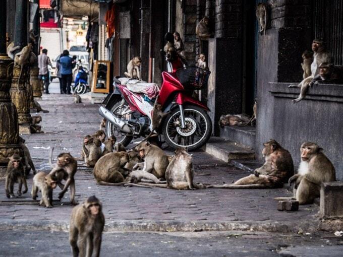 bike touring in thailand lopburi monkeys