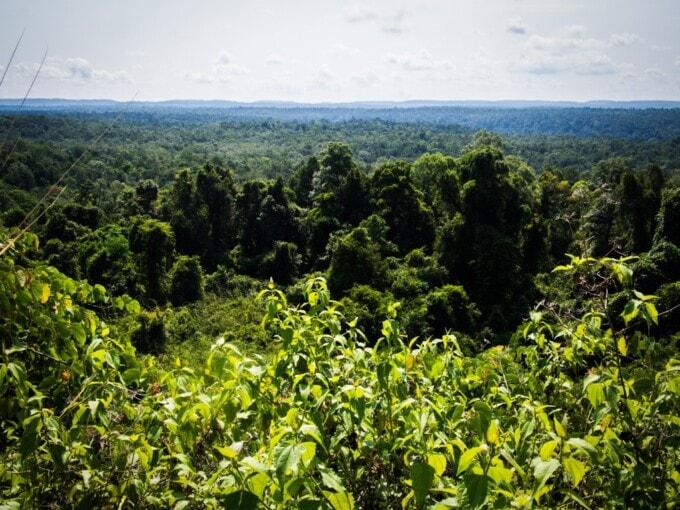 cambodian jungle koh kong