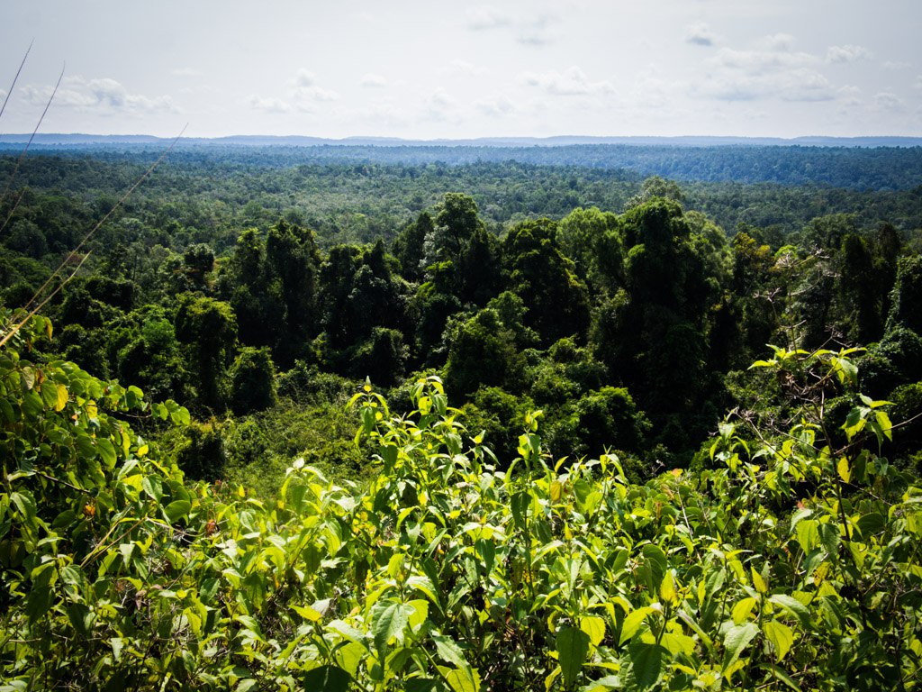 Jungle in all its glory, near Koh Kong.