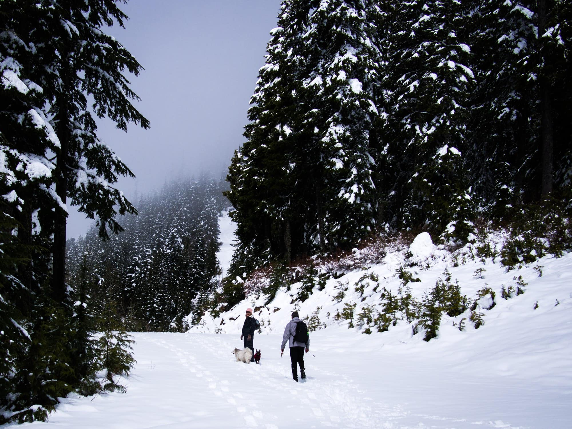 Hiking the Howe Sound Crest Trail.