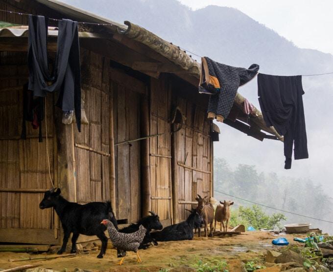 small farm hut in sapa vietnam with farm animals