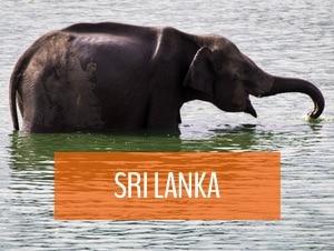 sri lanka travel my five acres