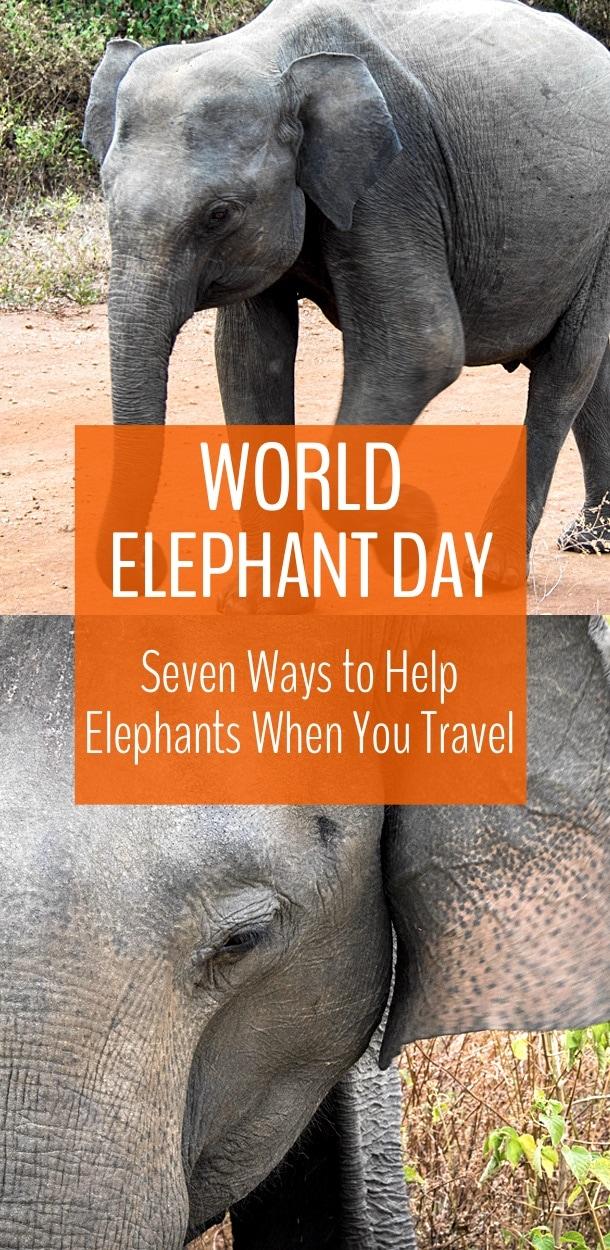 9e93931dd1a5 World Elephant Day  7 Ways to Help Elephants When You Travel