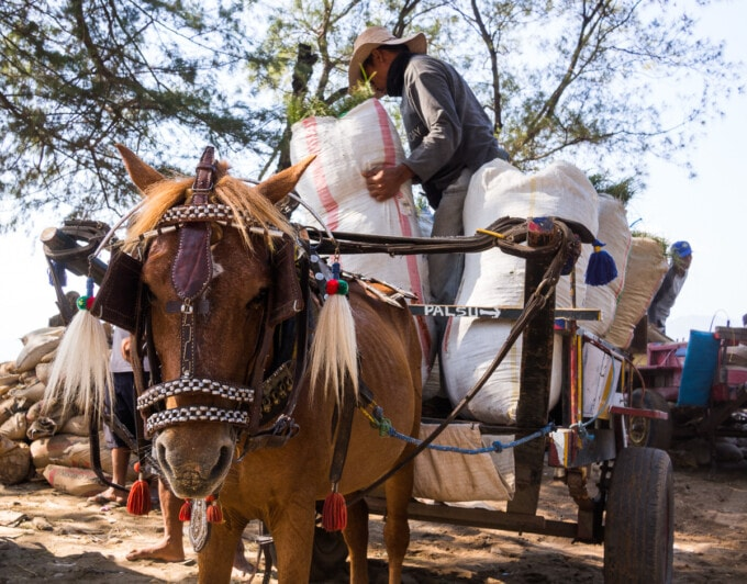 pony connected to a cart loaded with heavy bags on gili t