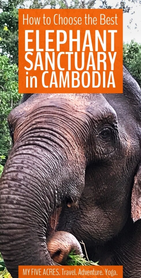 Find an elephant-friendly sanctuary in Cambodia. It's hard to know which elephant sanctuaries in Cambodia are legit and which are just in it for the money. We visited and researched the options while we were there. Read our guide to find out which we recommend and which you should stay away from! #cambodia #elephants #animals #ecofriendly #myfiveacres #mindfultravel