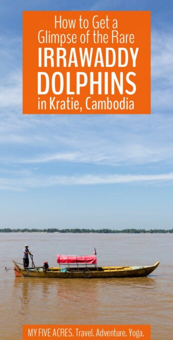 For many people, the rare Kratie dolphins are high on the list of must-see things in Cambodia. This post covers the best ways to see the dolphins and what to expect from your visit. #cambodia #irrawaddy #dolphins
