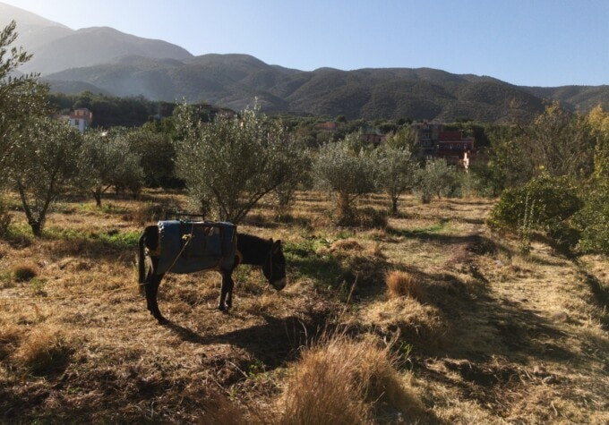 organic orchard in ouirgane valley