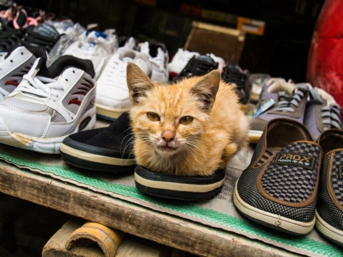 shoes for sale with a cat inside one