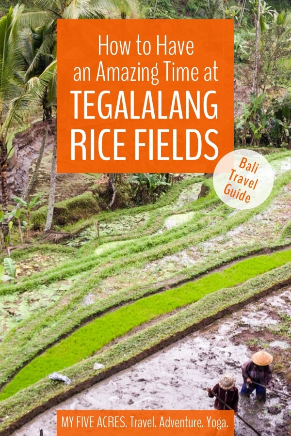 A visit to the spectacular Tegalalang Rice Fields is a part of most visitors' Bali itinerary. Our guide includes everything you need to know before you go, including entrance fees, opening hours, and the exact location.