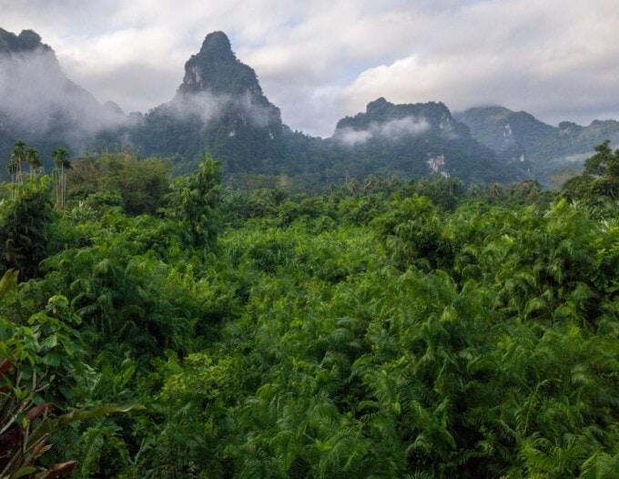 thailand 2 weeks jungle khao sok