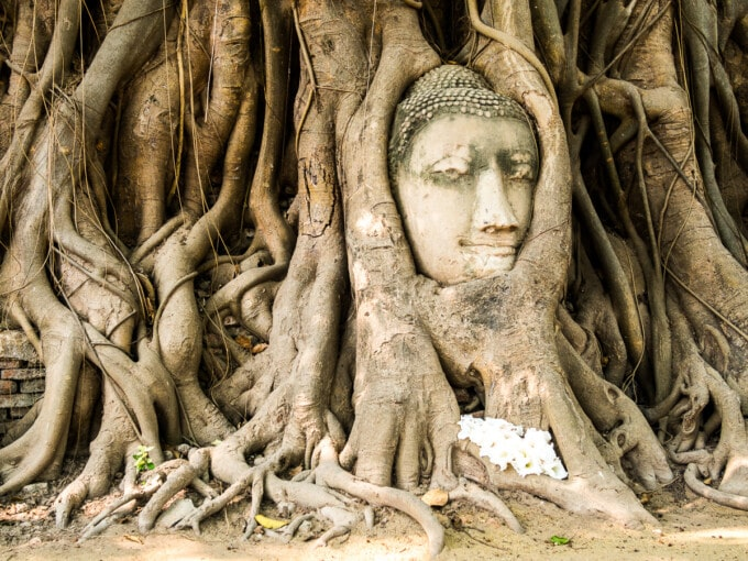 buddha head in tree Ayutthaya