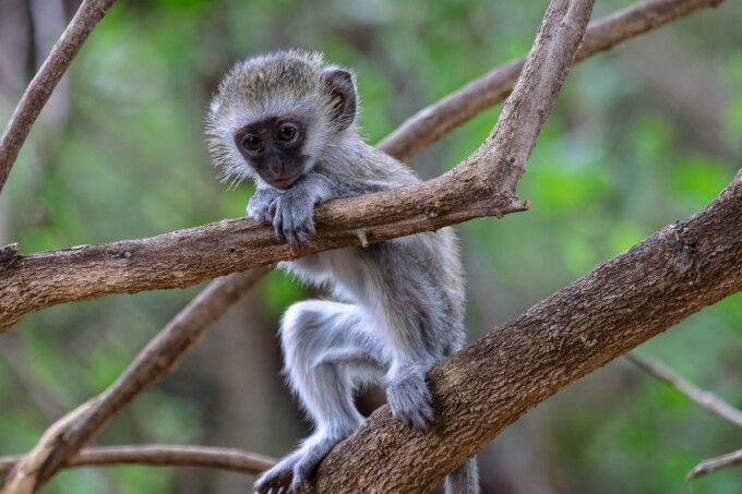 ecotravel baby primate in a tree