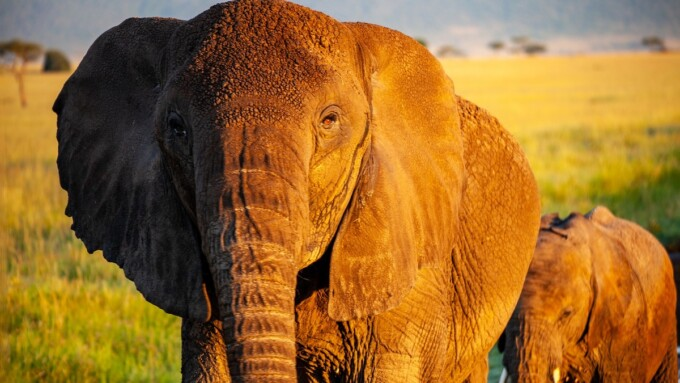 elephants pros and cons of ecotravel