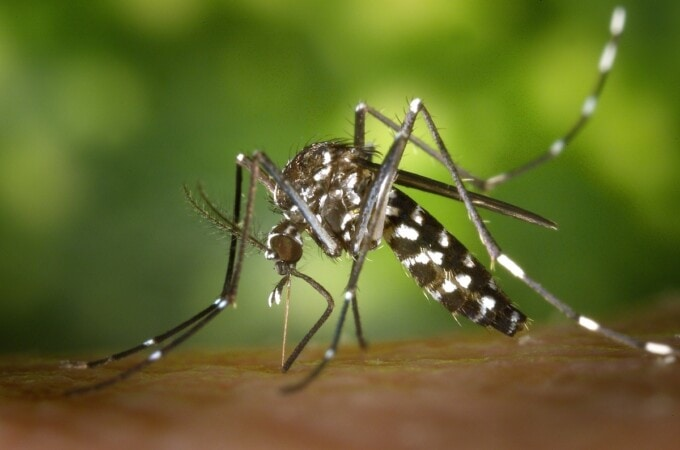 vaccines for vietnam tiger mosquito
