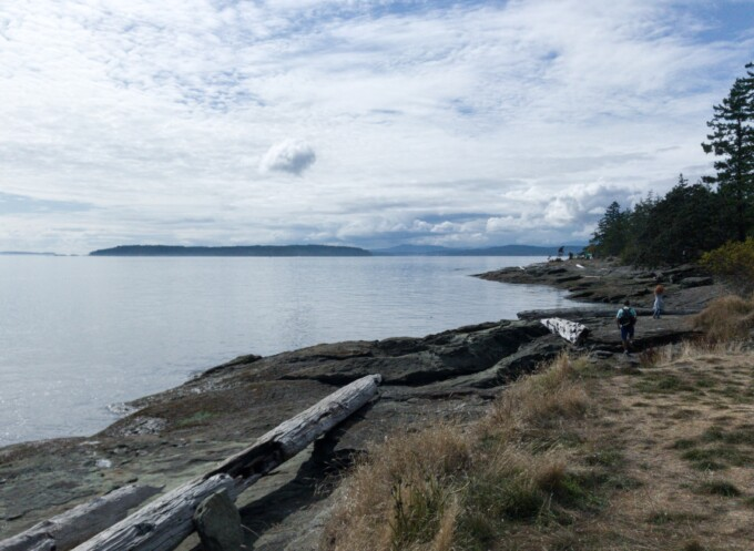 rocky beach with driftwood that can be seen in many campgrounds on Vancouver Island