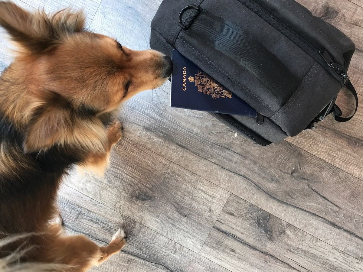 dog passport backpack travel