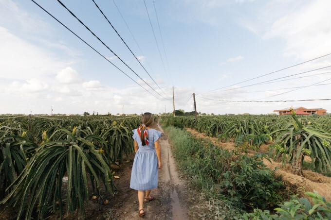 woman walking through dragon fruit field in vietnam