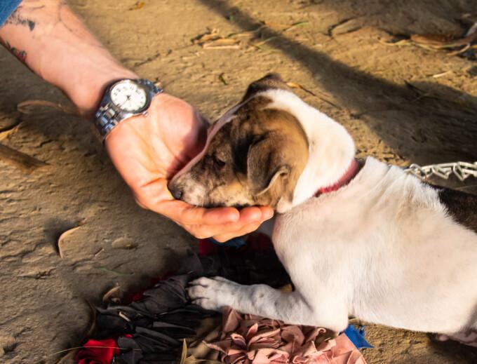 man cupping a dog's head hoi an