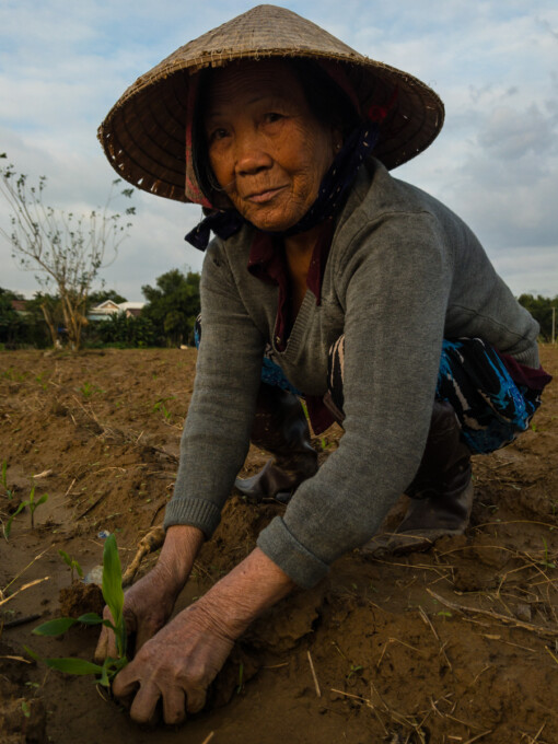 woman planting rice in hoi an
