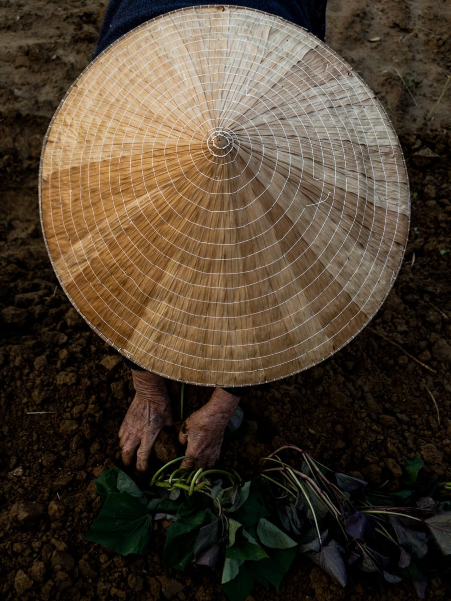 conical hat and farmers hands