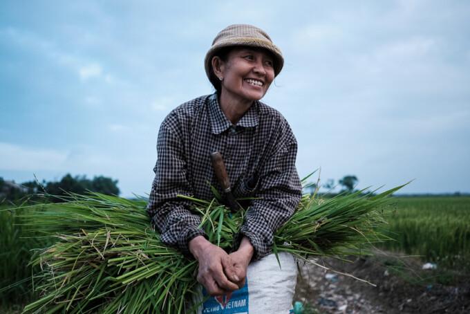 woman in the fields near hoi an vietnam