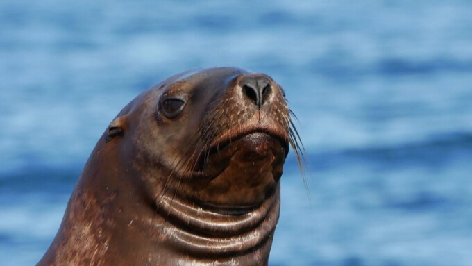 close up of a harbour seal