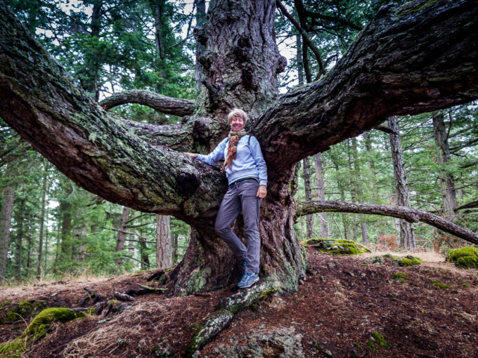 jane the author posing in the crook of a big tree