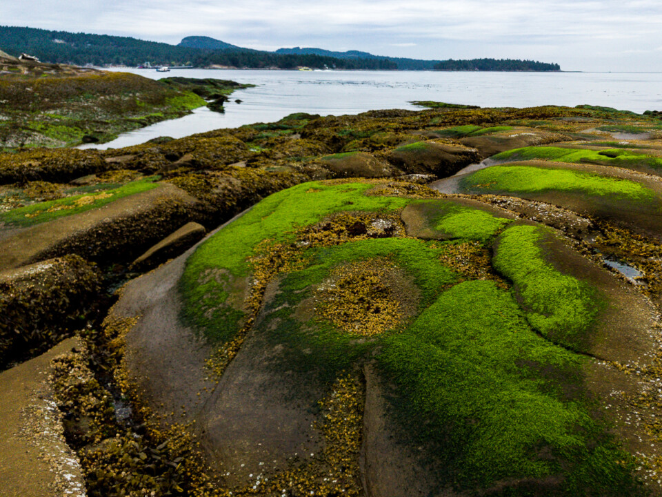 rocky beach covered in green moss in the gulf islands