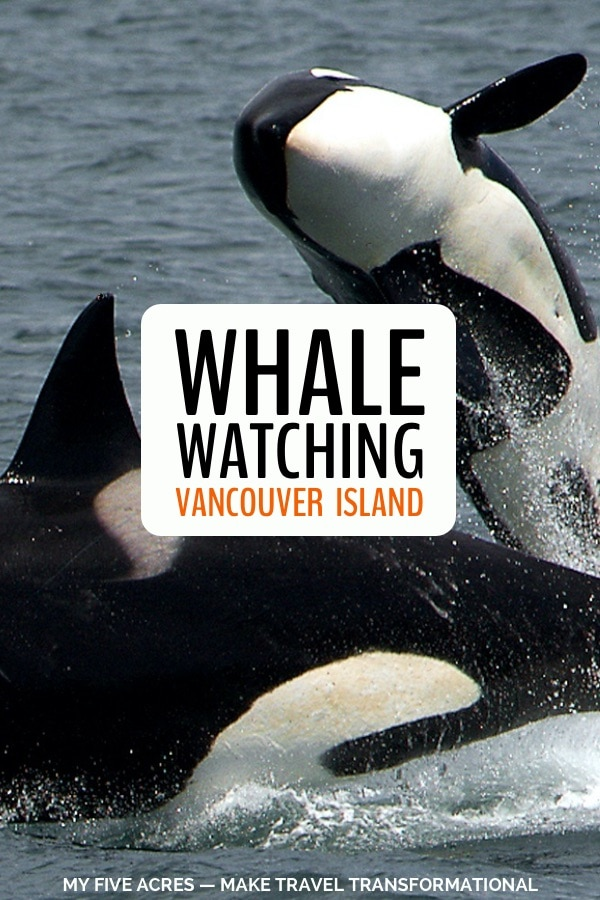 Vancouver Island is one of the best places in the world for whale watching. In this post we share exactly what to expect, when to go, and how to book. Click to get planning! #vancouver #vancouverisland #whales #whalewatching #travel #ecotravel #transform #myfiveacres