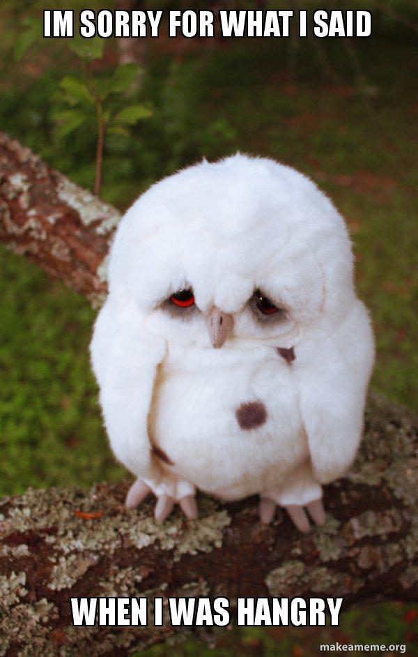 meme showing baby owl who is sorry for being hangry
