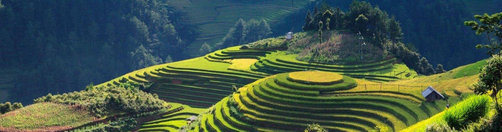 rice fields in mountains vietnam